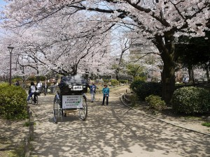 Sakura @Yoshikazu Takada
