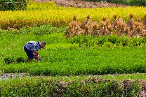 Produksi Pertanian Perlu Perubahan Radikal Hijaukucom Situs