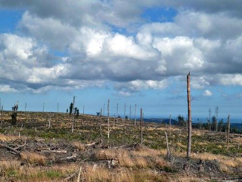 Deforestation - Paul Buckingham @ Flickr
