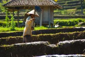 Bali farmer - Eric Bezine - Fotopedia