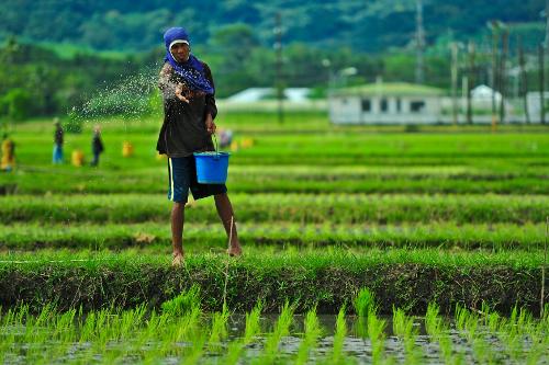 Tiga Tantangan Dunia Pertanian Masa Kini Hijaukucom Situs Hijau