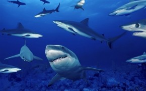 Sharks - Arteyfotografia