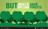 But what if we can save a forest - YouTube