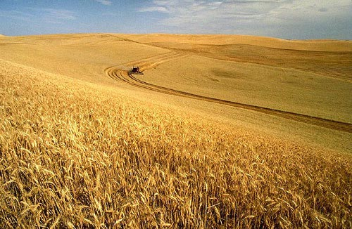 Wheat harvest on the Palouse - Wikimedia Commons