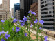 Chicago City Hall Greenroof - CHRISTOPHER MACSURAK