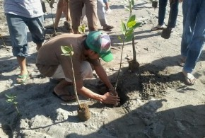 Mangrove Tree Planting - Trees for The Future