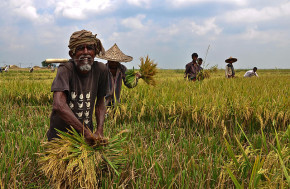 Agriculture - Balaram Mahalder