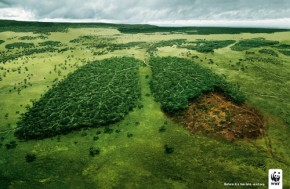 Before its too late - WWF (500x326)