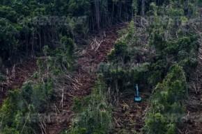 Deforestation in Riau - Greenpeace (500x334)