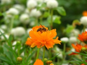 Ole flower and bee act by Aashiks (500x375)