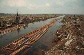 Riau deforestation - Wikimedia Commons (640x419)