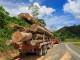 District Tawau Sabah Logging - CEphoto, Uwe Aranas