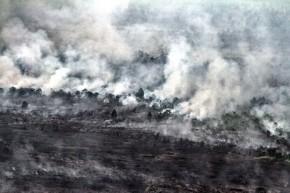 Kebakaran Hutan - Greenpeace Indonesia