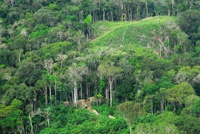 Brazilian Amazon forest - Gleilson Miranda  Governo do Acre