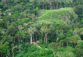 Brazilian Amazon forest - Gleilson Miranda  Governo do Acre