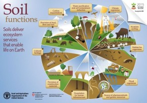Soil functions - FAO