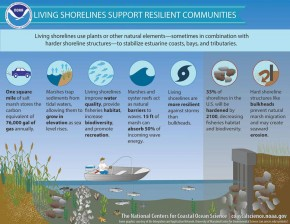 Manfaat Garis Pantai Alami
