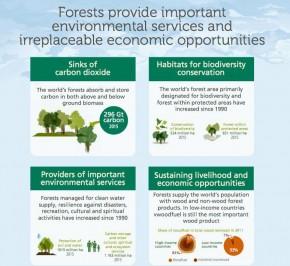Manfaat Hutan Bagi Dunia