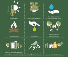 9 Manfaat Menanam Pohon di Perkotaan