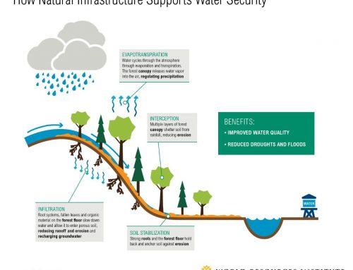 Cara Alam Mengolah Air Bersih untuk Anda