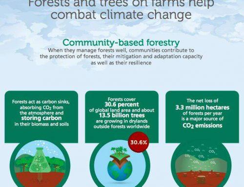 Cara Hutan Atasi Perubahan Iklim