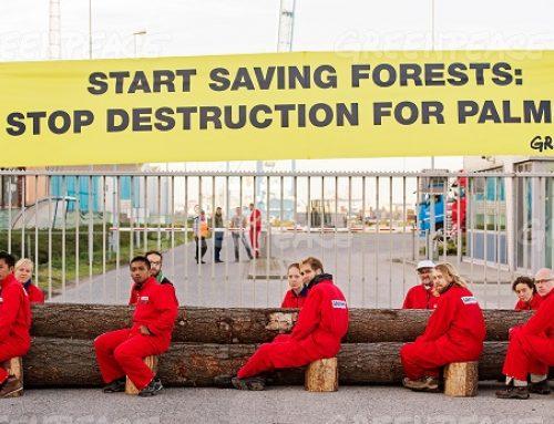 IOI Mulai Bergerak Hapuskan Deforestasi