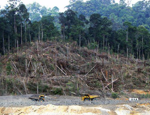 Hentikan Tambang Ilegal di Kawasan Hutan!