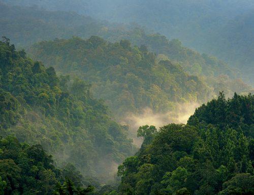 Kerusakan Hutan Hambat Pembangunan