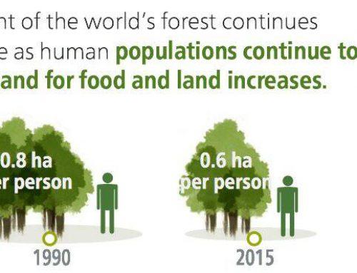 Hutan Dunia Semakin Sempit