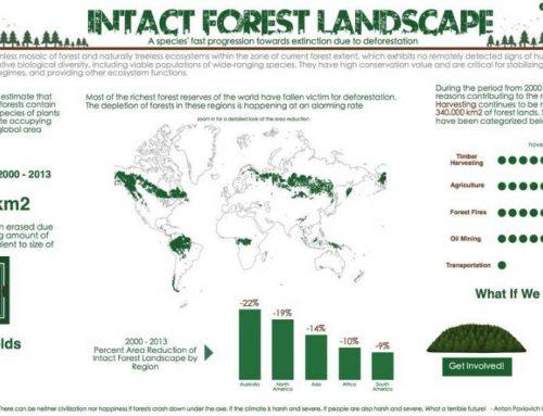 Hutan Dunia dari Masa ke Masa