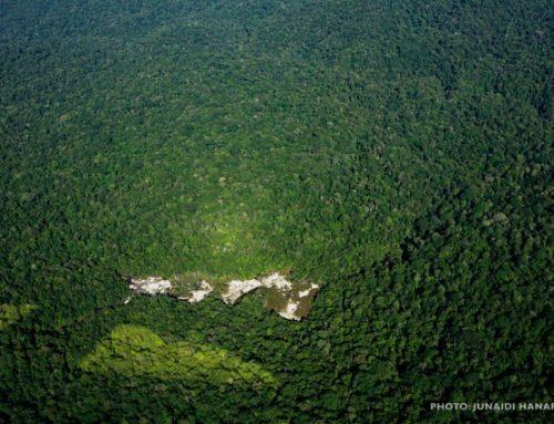 Ekosistem Leuser Masih dalam Bahaya
