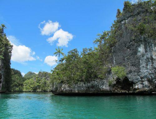 Ekosistem Blue Carbon Dukung Pengurangan Emisi Nasional