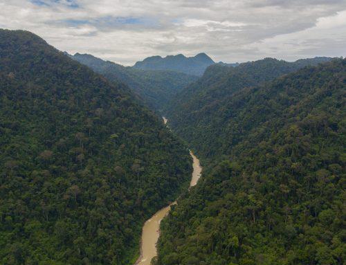 Mega Proyek Ancam Ekosistem Leuser, Situs Warisan Dunia