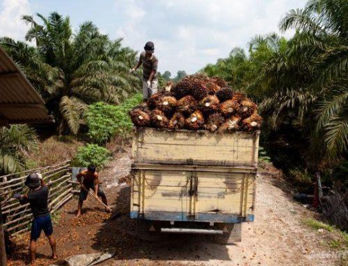 Industri Kelapa Sawit Masih Mengancam Hutan Indonesia