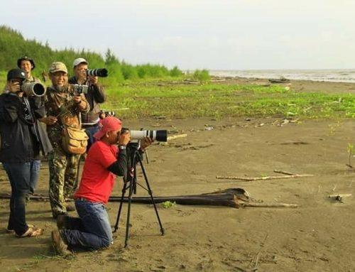 Tim Temukan Burung Langka di Pantai Cemara