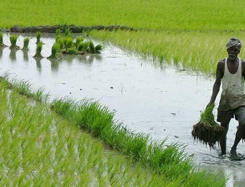 Bencana Rugikan Sektor Pertanian 1.320 Triliun Rupiah