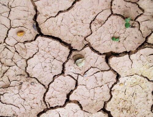 Separuh Spesies akan Punah Akibat Perubahan Iklim