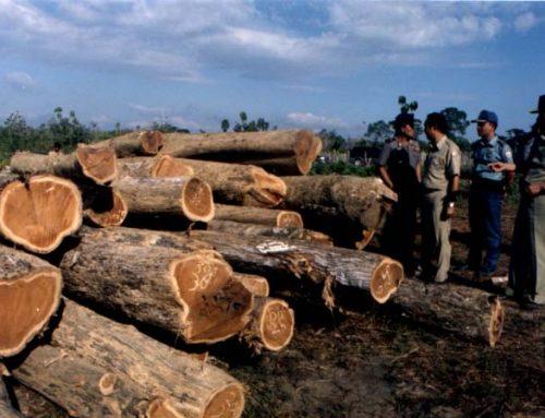 Hutan Jati Muna, Riwayatmu Kini