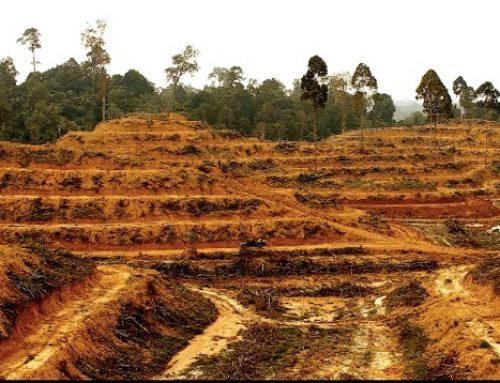 Merek-Merek Besar Terus Langgar Komitmen Bebas Deforestasi