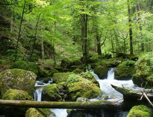 Hutan Lindungi Masyarakat dari Krisis Air