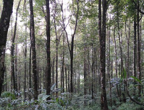 Cerita Sukses Pemulihan Ekosistem Hutan