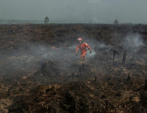 Fires Burn Inside Palm Oil Concessions Linked to Major Brands