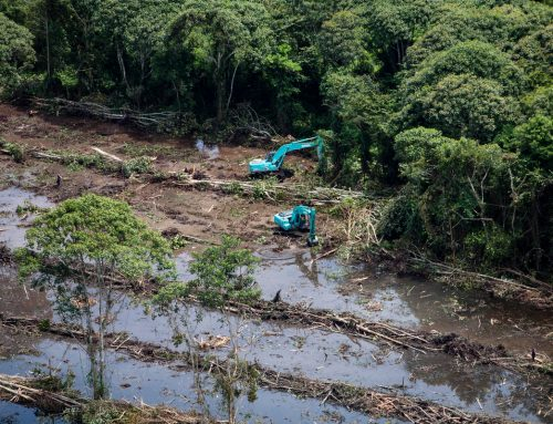 Time for a Ban on Deforestation, Not a Moratorium