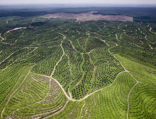 Greenpeace: Biggest brands still linked to rainforest destruction