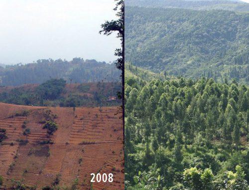 300 Hektar Lahan Terbuka Berhasil Dihutankan Kembali