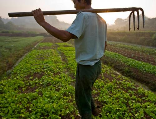 91% Masyarakat Tidak Tahu Dampak Produksi Pangan