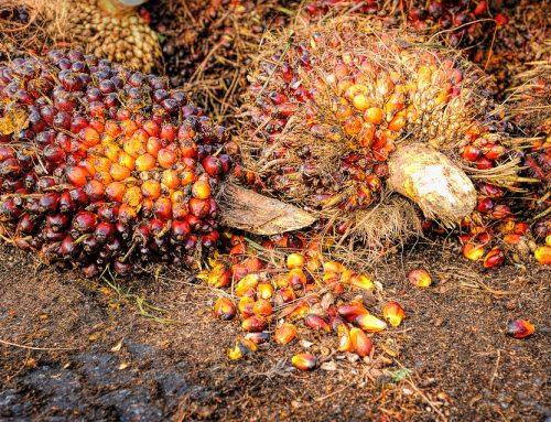 RSPO Cabut Sertifikasi Keberlanjutan Kelapa Sawit Indofood