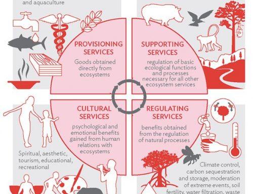 4 Manfaat Lingkungan Sehat dan Lestari