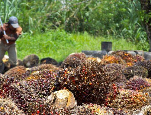 RSPO Akan Tangguhkan Keanggotaan Indofood
