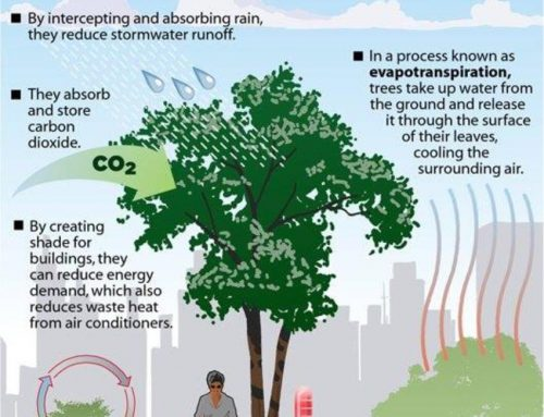 Pohon Mendinginkan Dunia, Ini Caranya